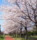 周辺環境(みさと公園(水元公園)) ミモザ三郷鷹野(有料老人ホーム[特定施設])の画像